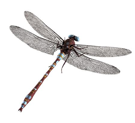 A brown blue dragonfly with blue eyes and wings spread