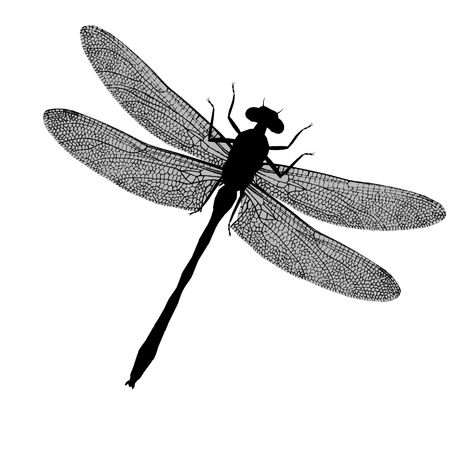 Dragonfly: A black silhouette of a dragonfly with wings spread Stock Photo