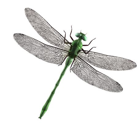 A green dragonfly with green eyes and wings spread Stock Photo