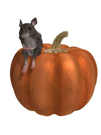 Mouse on a pumpkin on a white background