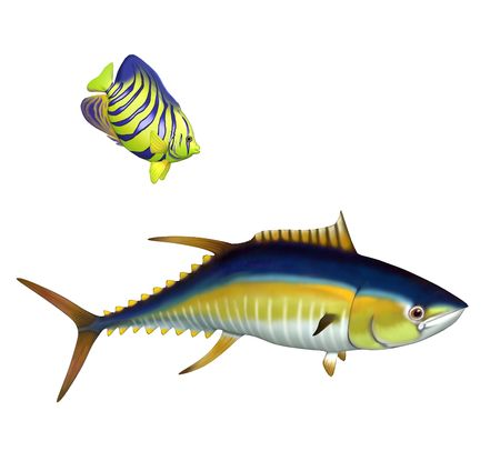 gills: Two tropical fish