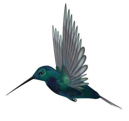 Blue green hummingbird having brilliant iridescent plumage and long slender bills; wings are spread for vibrating flight