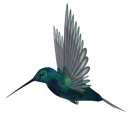Blue green hummingbird having brilliant iridescent plumage and long slender bills; wings are spread for vibrating flight