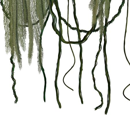 Groene jungle wijnstokken op een witte achtergrond