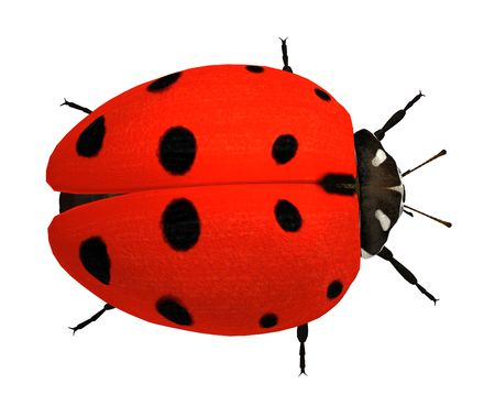 longlegs: Ladybug