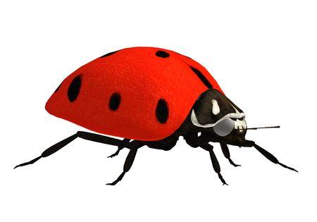 Ladybug Stock Photo - 5116802