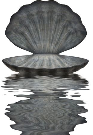 bounding: Large blue grey sea shell in water