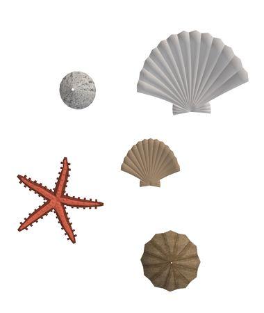 fish star: Conchas marinas y estrellas de mar