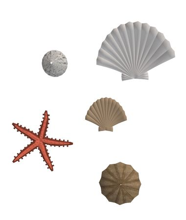 briny: Sea shells and star fish