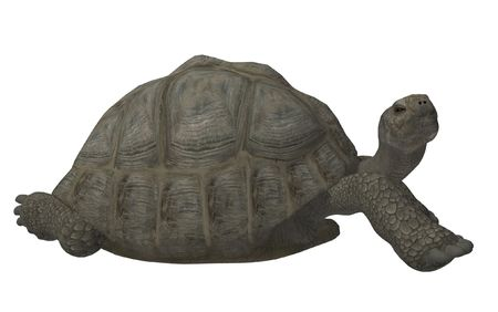 cooter: an aquatic reptile with a flattened shell enclosing the body and flipper-like limbs adapted for swimming