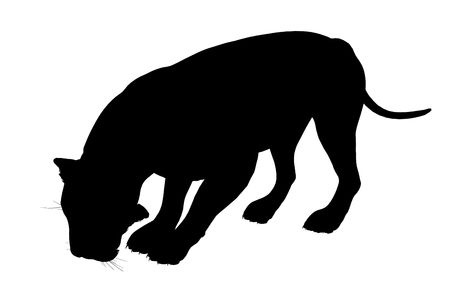Silhouette d'illustration art lion noir sur fond blanc Banque d'images - 5682138