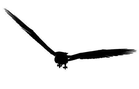Black eagle art illustration silhouette on a white background