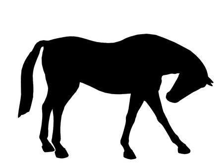 Black horse art illustration silhouette on a white background Reklamní fotografie