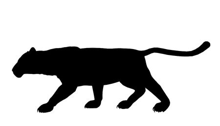 cougar: Black panther art illustration silhouette on a white background