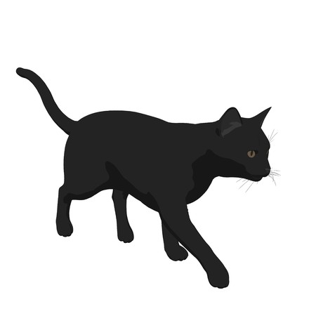 Black cat  on a white background