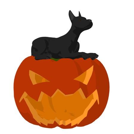 Black puppy dog on a pumpkin on a white background Zdjęcie Seryjne