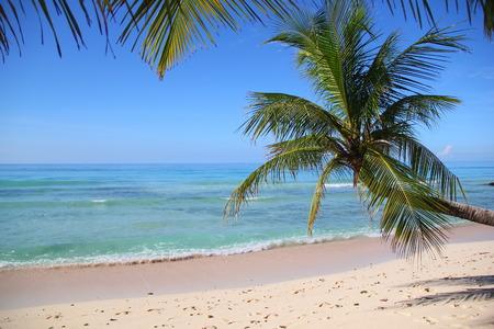 Tropical Beach Scene in the Caribbean