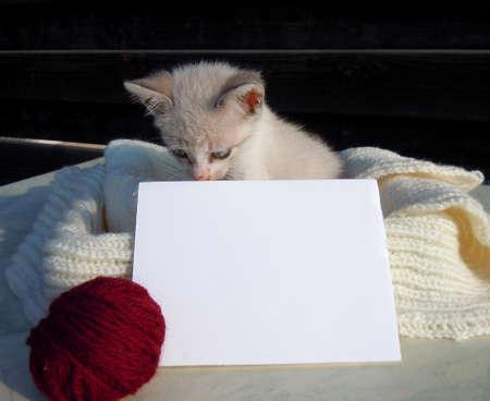 Little kitten and blank card photo