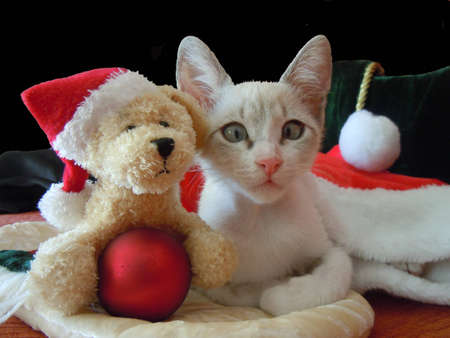 young cat and his christmas friend photo