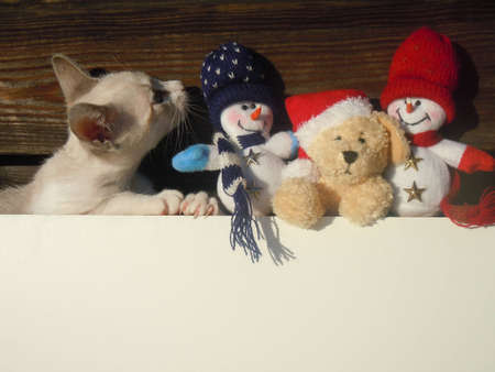 Merry Christmas all animal lovers. Stock Photo - 11359429