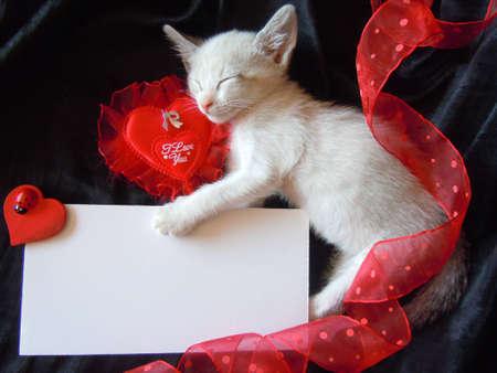 cat alphabet: kittens valentines card