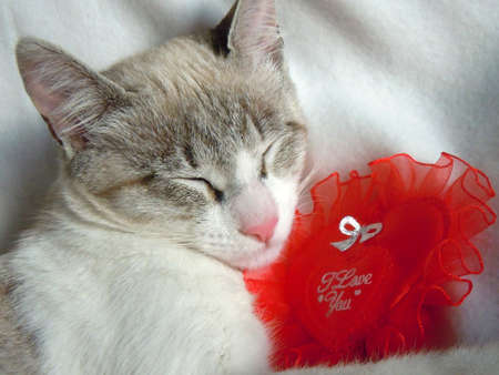 saint valentines day: valentine