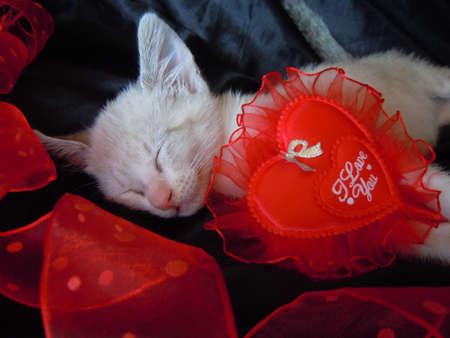 saint valentines day: little kitten in love