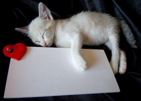 cat alphabet: sleeping kitten and white blank card