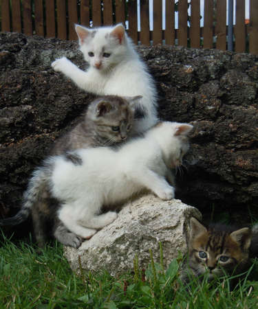 meow: four playful kittens in the garden Stock Photo