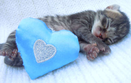 sleeping baby kitten photo