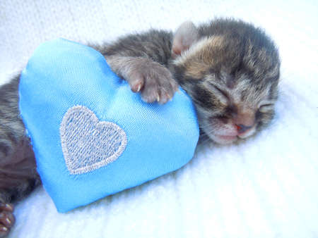 sleeping kitten and heart photo