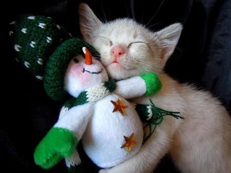 amigos abrazandose: gatito abrazo con el juguete mu�eco de nieve Foto de archivo