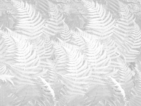 undergrowth: bright background and delicate fern pattern texture Stock Photo
