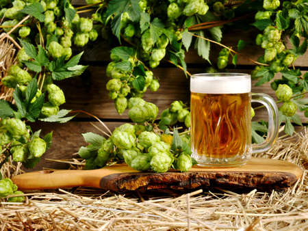 Still life with hop cones and a mug of beer. Stock fotó