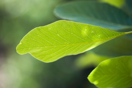A peaceful, green leaf grows on a tree in summertime. Фото со стока
