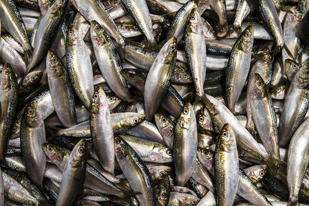 souq: fish for sale at a Deira fish market