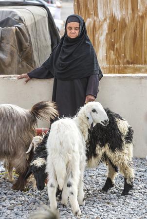 oma: Nizwa, Oma, 24th March, 2017: old Omani woman at Nizwa goat market with her goats