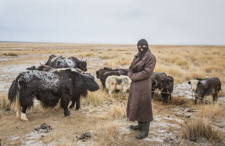 BAYAN ULGII, MONGOLIA - CIRCA OCTOBER 2016: A mongolian man with his yaks at sunrise in a very cold day Stok Fotoğraf - 81828246