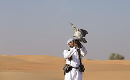 Dubai, UAE, November 18th, 2016: falconer training his falcon