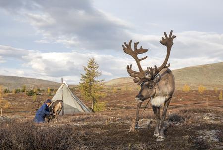 rein deer in northern Mongolia