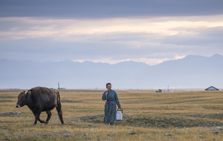 huvsgul, Mongolia, September 6th, 2017: mongolian woman walking to milk her cows in a landscape of northern Mongolia