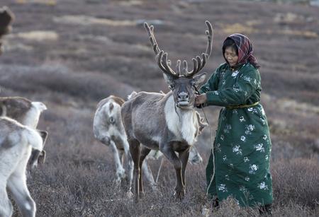 tsaatan woman with reindeer in Northern Mongolian landscape Stock Photo