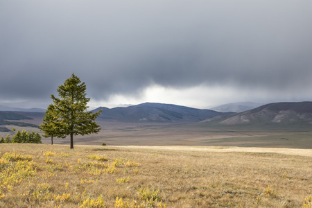 trees in a northern Mongolian landscape