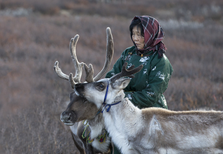 tsaatan woman with reindeer in Northern Mongolian landscape Stock Photo