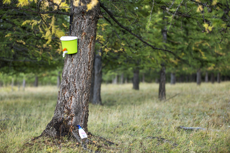lavamanos: plstic handwash canister on a tree in a forest Foto de archivo