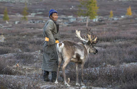 tsaatan man, dressed in a traditional deel, with his reindeers in a taiga of northern Mongolia Stock Photo