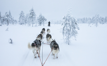 Husky dogs pulling a sledge in Arctic Finland