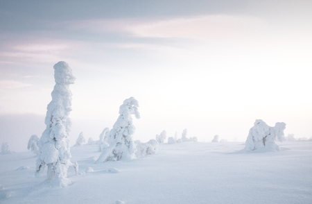frozen trees in Riisitunturi National Park in Finnish Lapland