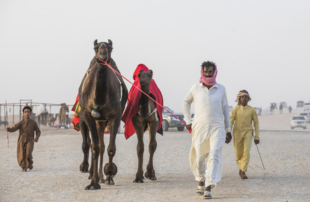 Madinat Zayed, United Arab Emirates, December 15th, 2017: arab man with his camel at The Million Street where camels get bought and sold