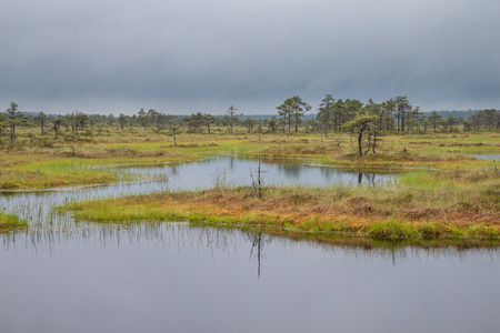 landscape of Kakerdaja bog in central Estonia
